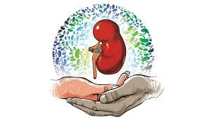 kidneys health